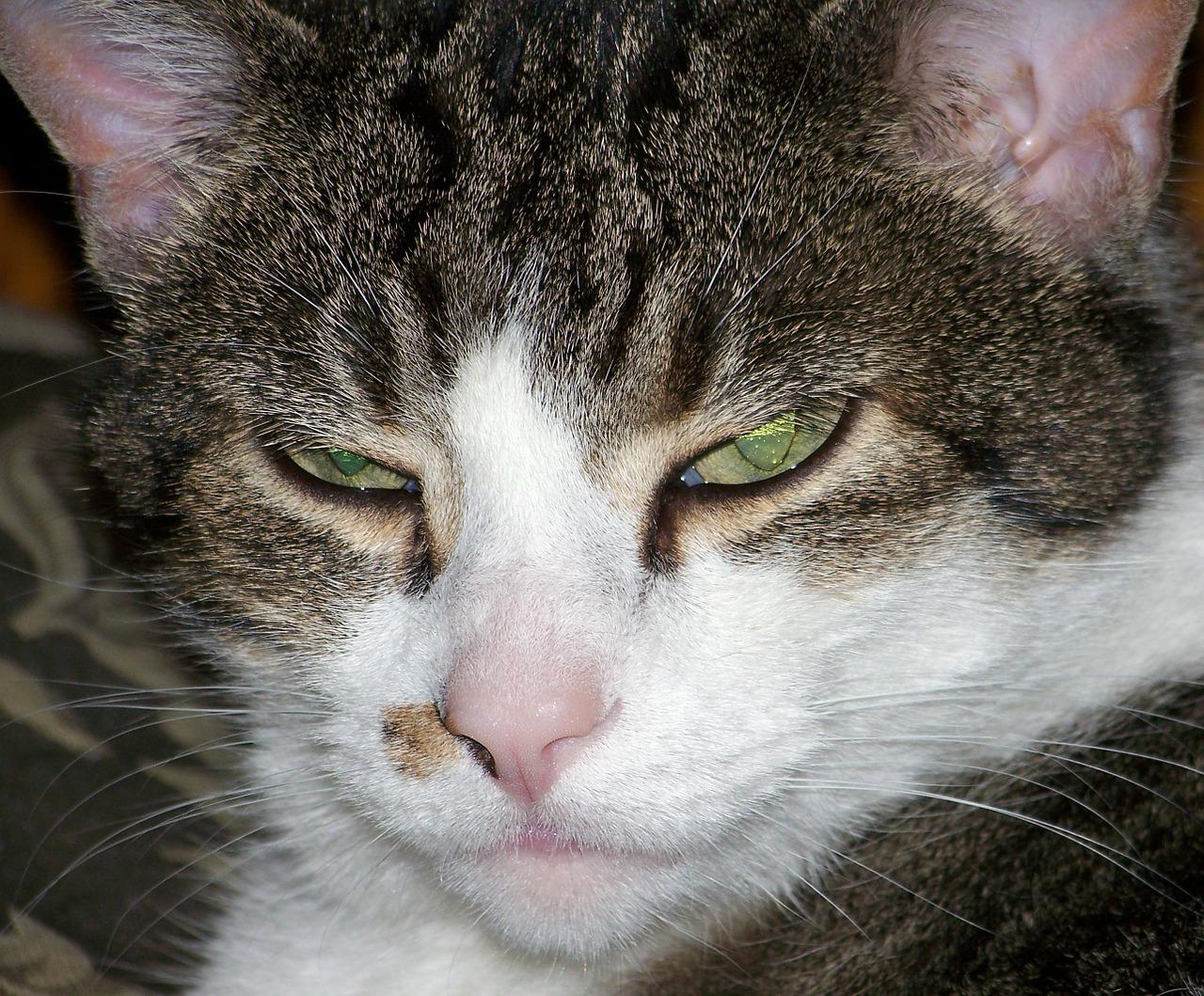 cat-20688_1280